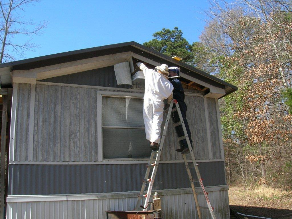 Bee Removal And Relocation Mt Vernon Amp Mt Pleasant Tx