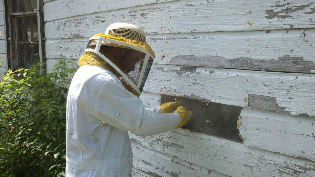 Bee Removal and Relocation | Mt  Vernon & Mt  Pleasant, TX